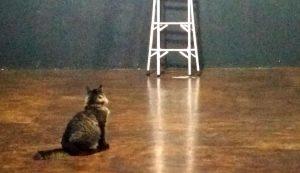 Um gato participa de um dos atos em Bauru.   Foto Polo Cultural